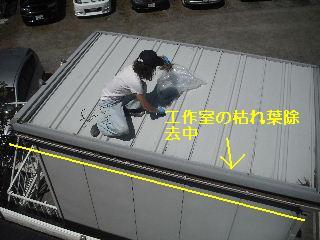 雨樋清掃_f0031037_20184161.jpg