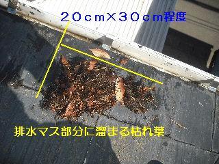 雨樋清掃_f0031037_2019854.jpg