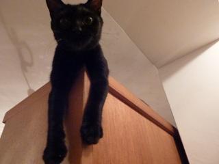 ベーシックぺしこん猫 のぇるろった編。_a0143140_2263857.jpg