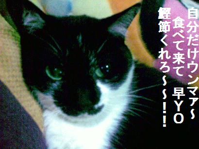 a0087146_9123246.jpg