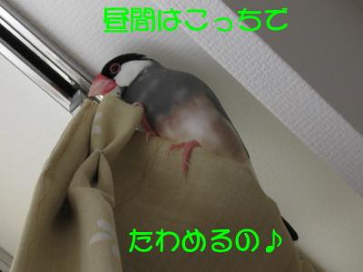 b0158061_20472846.jpg
