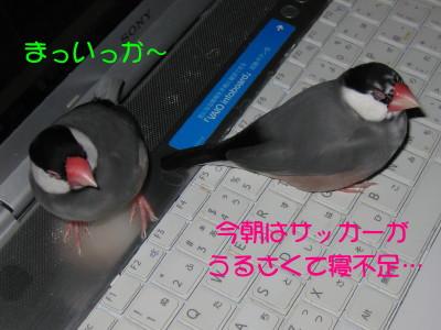 b0158061_2048404.jpg