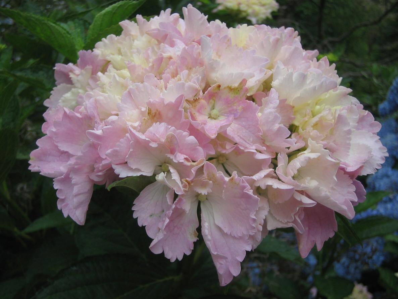 咲いています。_f0085369_21594121.jpg