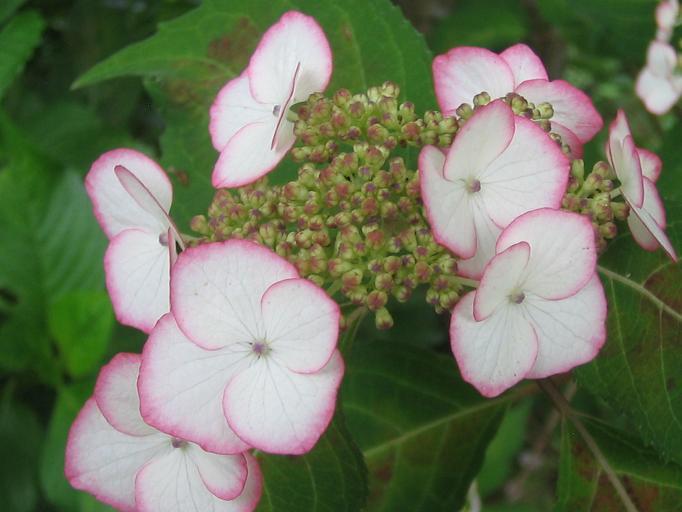 咲いています。_f0085369_2159550.jpg