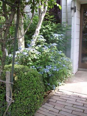 ワ~ズワ~スの庭 紫陽花が見頃です_e0187897_19483581.jpg