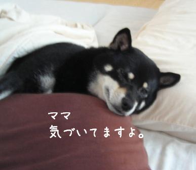 杏の寝顔_f0068501_11232655.jpg