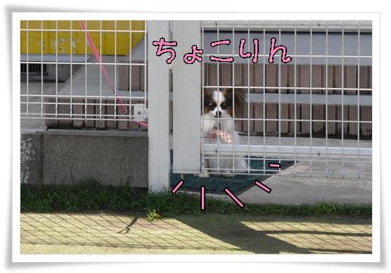 コイケルオフ☆_c0065512_1933557.jpg