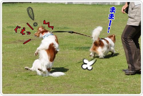 コイケルオフ☆_c0065512_1947181.jpg