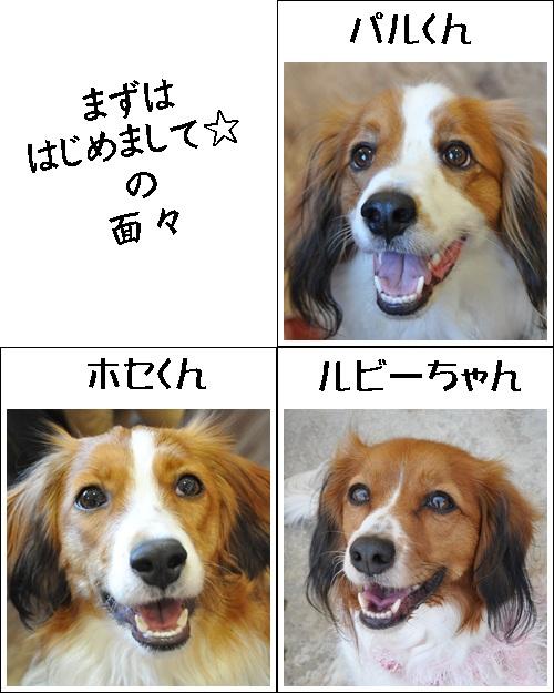 コイケルオフ☆_c0065512_1991015.jpg