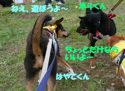 f0121712_16103746.jpg