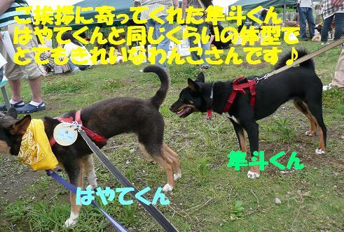 f0121712_1695775.jpg