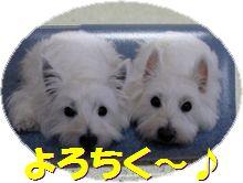 f0084422_203609.jpg