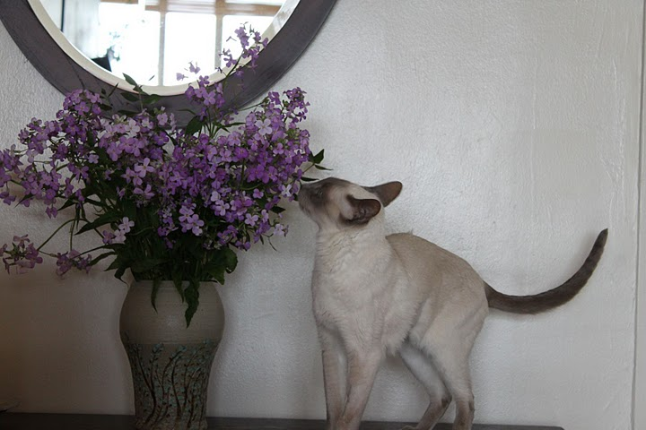 猫の写真集 Vol. 2_f0095325_13184864.jpg