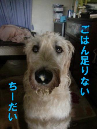 f0176830_20502632.jpg