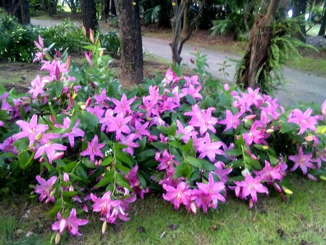 初夏の薫り_f0105533_13522337.jpg