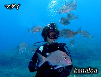 Divehouse Kanaloa  八丈島 ダイビングログ_b0189640_21184267.jpg
