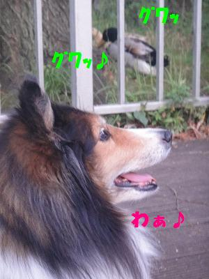 e0195743_2572041.jpg