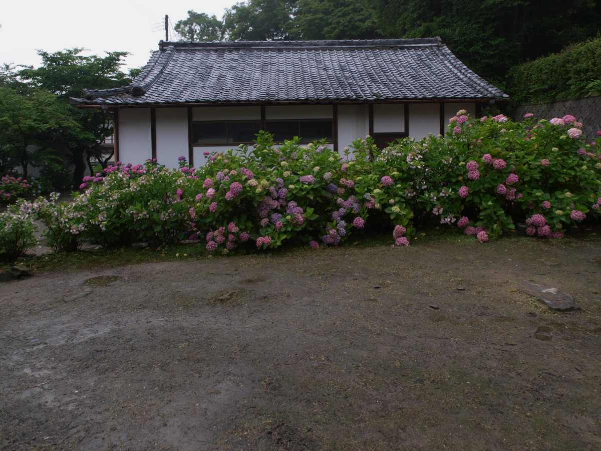 奈良 矢田寺 紫陽花 3_f0021869_2240428.jpg