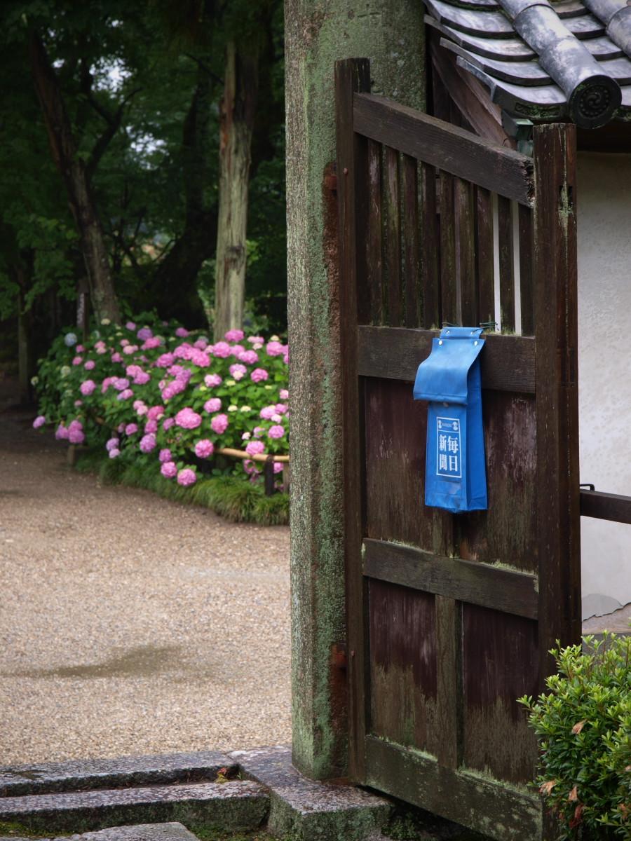奈良 矢田寺 紫陽花 3_f0021869_22415623.jpg