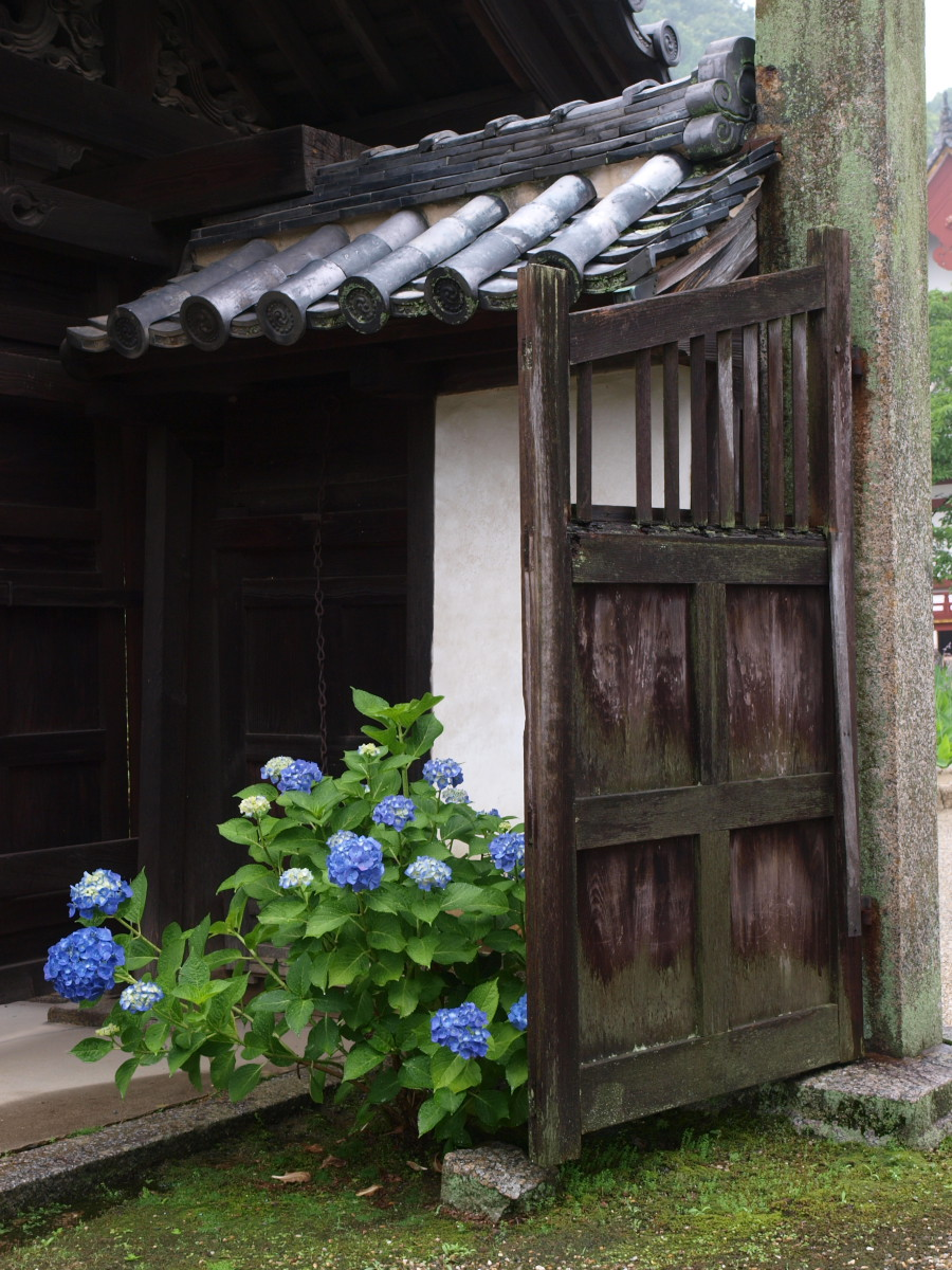 奈良 矢田寺 紫陽花 3_f0021869_22422119.jpg