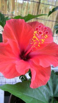 咲きました!_b0134285_23252244.jpg