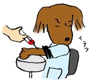 パッちゃん 血尿が出る。_d0176092_13161556.jpg