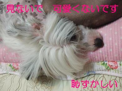 f0179203_6543310.jpg