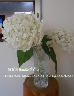 d0170109_21572438.jpg