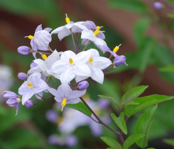 紫陽花も終わりに・・・_d0147812_13382035.jpg