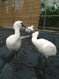 鳥にセクハラされる の巻き_c0053520_1346631.jpg