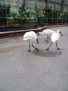 鳥にセクハラされる の巻き_c0053520_14292644.jpg