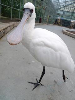 鳥にセクハラされる の巻き_c0053520_14343953.jpg