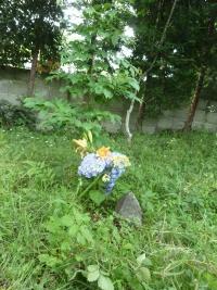 f0118135_0354245.jpg