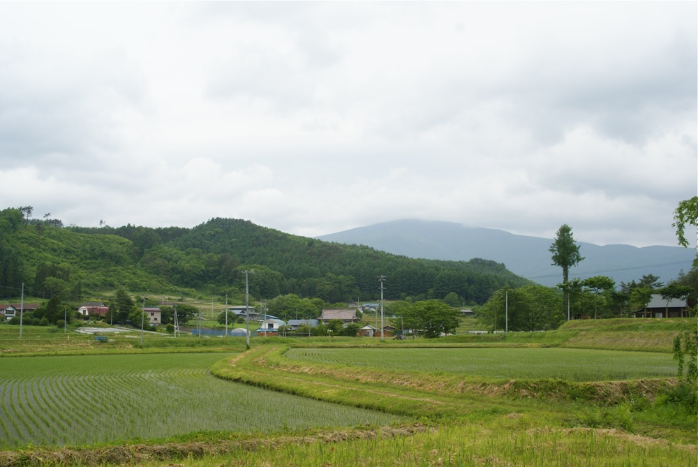 菖蒲と謎の親水公園_d0001843_22423784.jpg