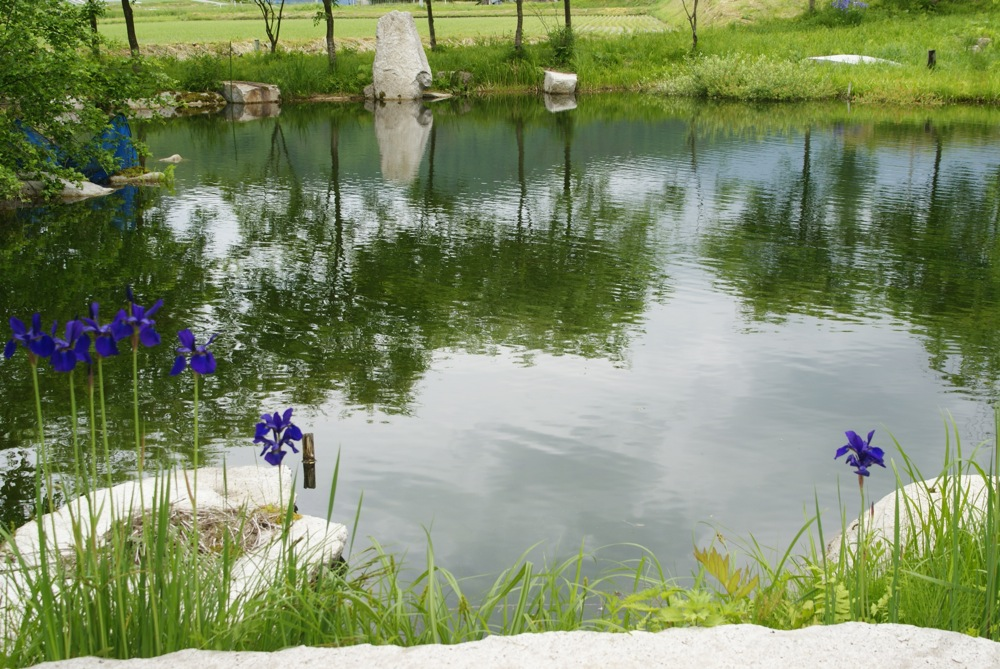 菖蒲と謎の親水公園_d0001843_23251466.jpg