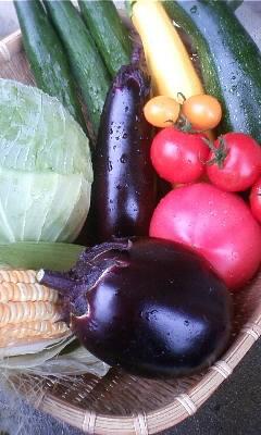 収穫野菜_e0081959_11253872.jpg