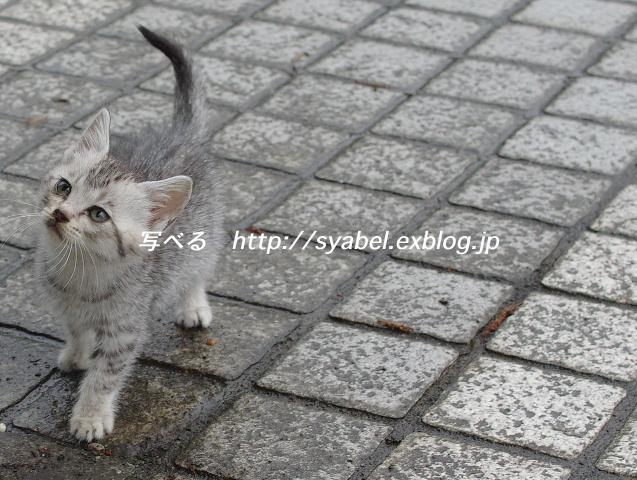 c0153764_20122573.jpg