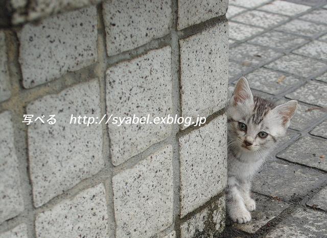 c0153764_2012382.jpg