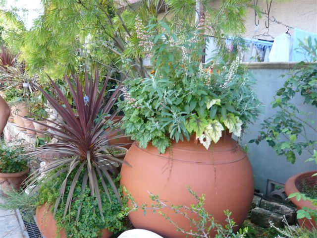 「この本をお買い!」・・・・「この植物をお買い!」_b0137969_1048068.jpg