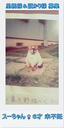13匹の猫たち…とりあえず一段落_c0167175_2258073.jpg