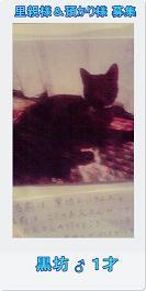 13匹の猫たち…とりあえず一段落_c0167175_2259353.jpg