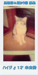 13匹の猫たち…とりあえず一段落_c0167175_22593654.jpg