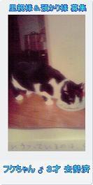 13匹の猫たち…とりあえず一段落_c0167175_2302834.jpg