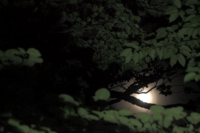 月明かりの六角牛山_f0075075_1119019.jpg