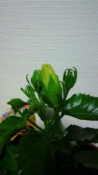 トロピカル~♪_b0134285_2312576.jpg