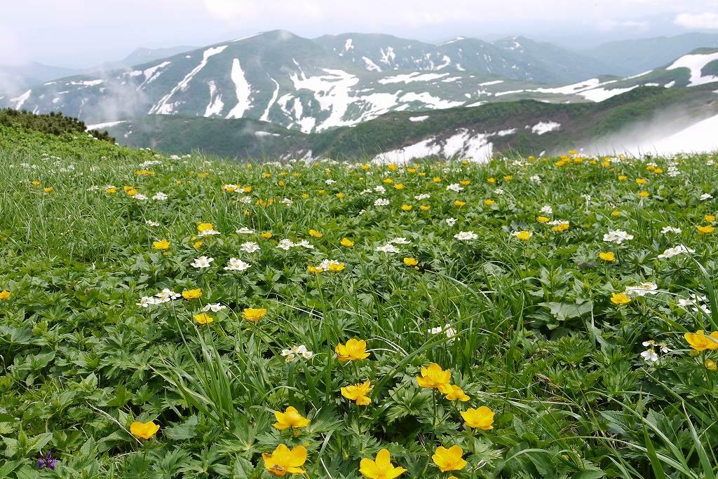 6月27日、暑寒別岳_f0138096_22135072.jpg