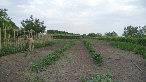 広いプーリアの畑から_f0106597_053893.jpg