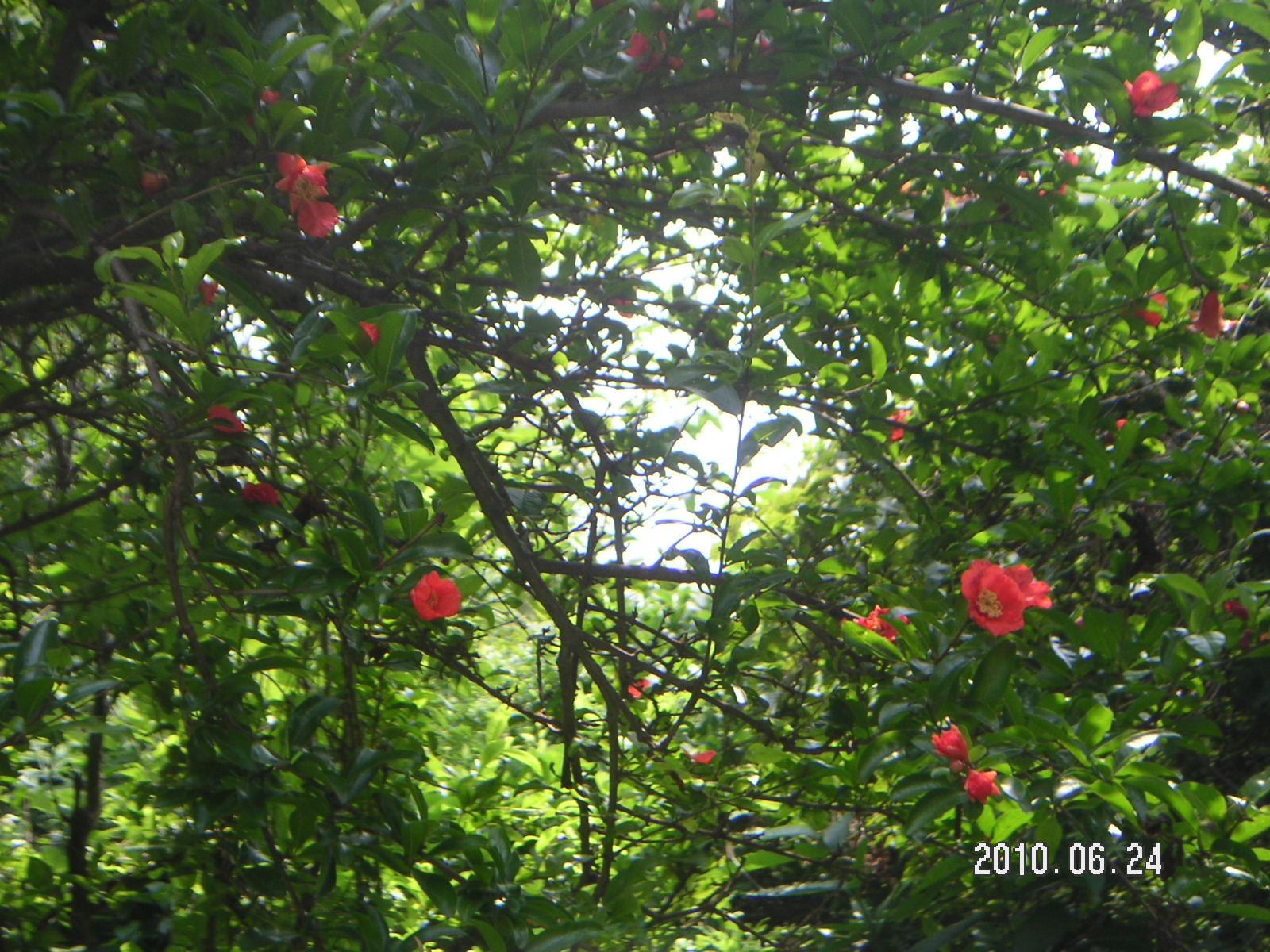 天からの恵実 ♪ (Zakuro  de  kuro &ki )_f0146802_15103496.jpg