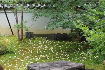 京都妙心寺で精進料理を_a0115906_17295680.jpg