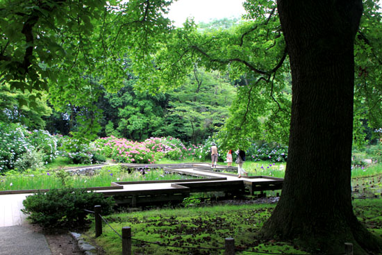 植物園 花づくし_e0048413_20165366.jpg